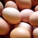 Домашние куриные яйца (Organic)