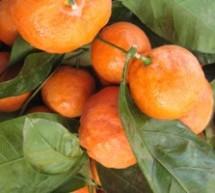 Ешь мандарины – не заболеешь диабетом и сердечными болезнями!